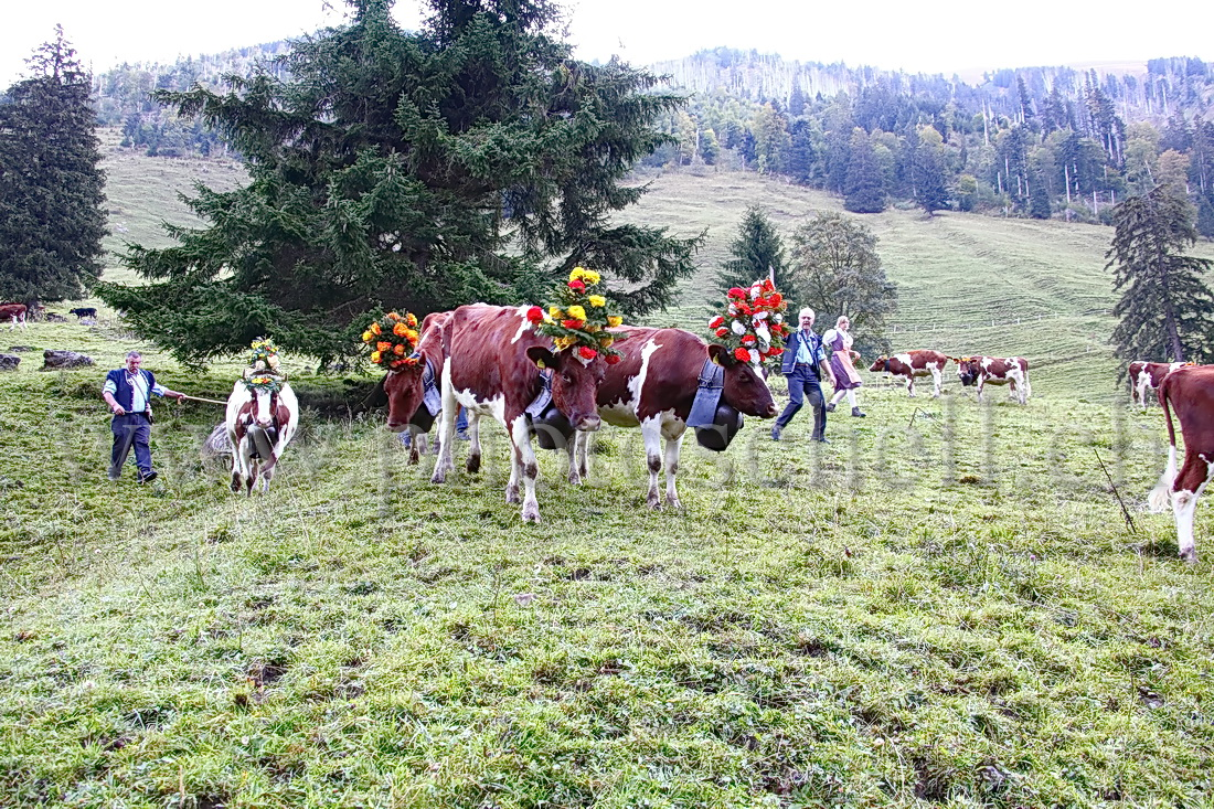 Jacques schell photographe synthesis of all pictures from www - Regroupement Des Vaches Par Les Armaillis