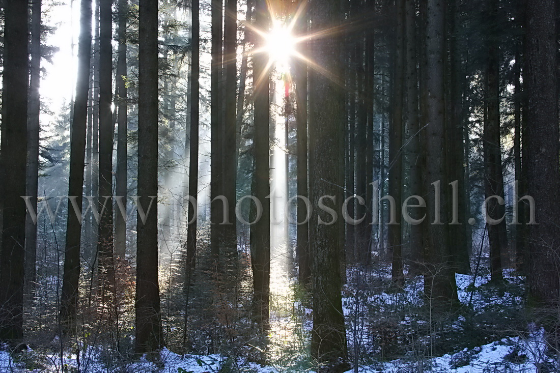 Le soleil perce à travers la forêt des monts de Marsens...